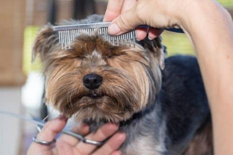 La tosatura è eseguito con attrezzature che consentono di tosare il pelo a  macchina eliminando ogni rischio per il vostro amico a 4 zampe.